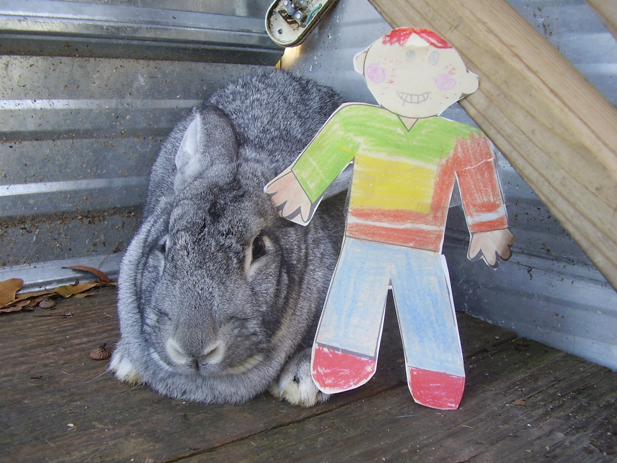 Flat Stanley with a chinchilla