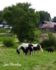 Horses at BellBottom farm
