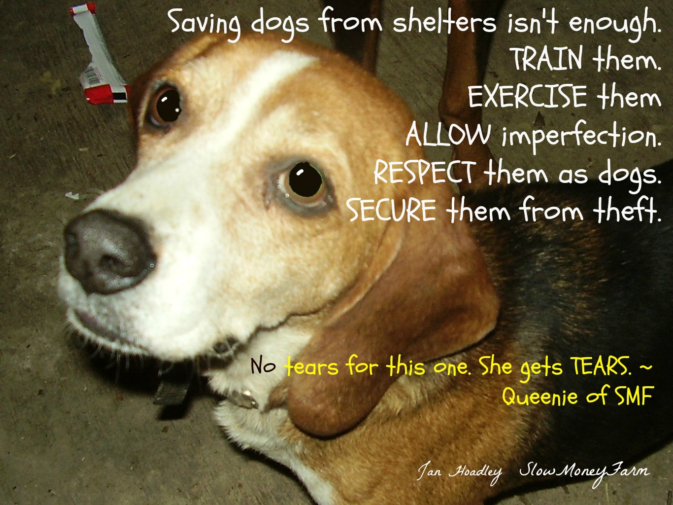 Love Your Dog? TRAIN Him! ~ Divas Domain | Food, Farm, Life Choices